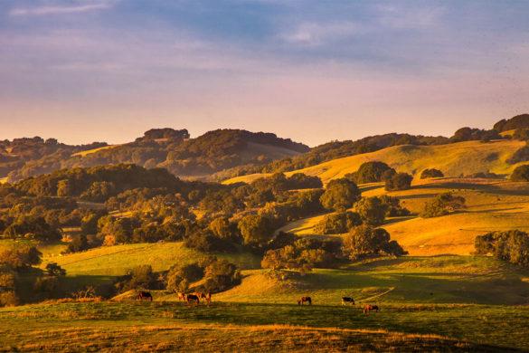 Look Unto the Hills