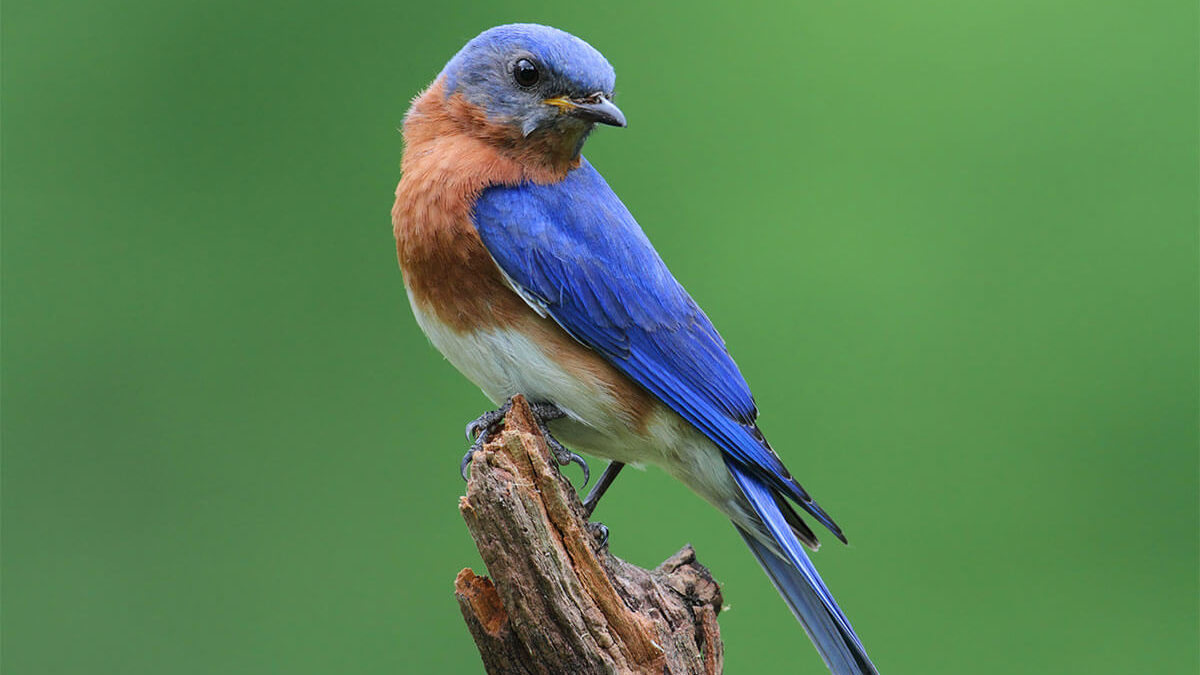 Lessons from a Bluebird