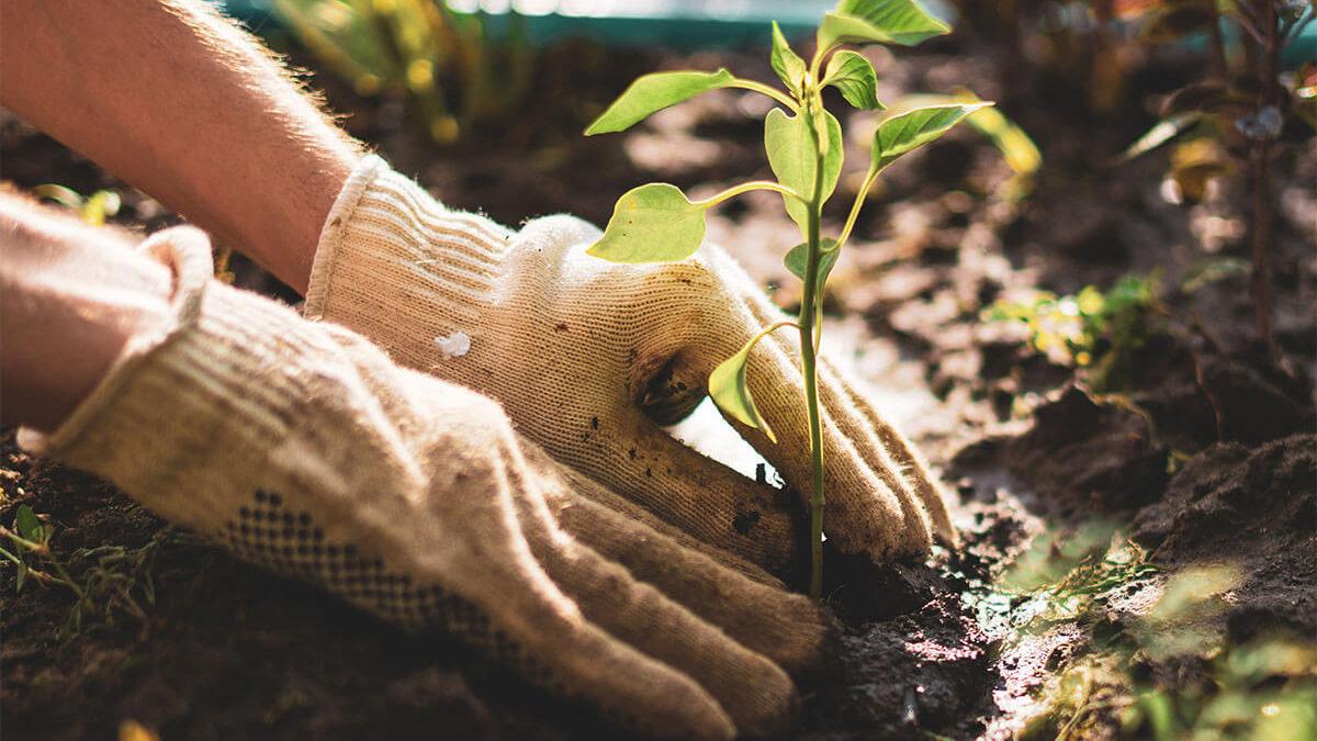The Secret to Gardening