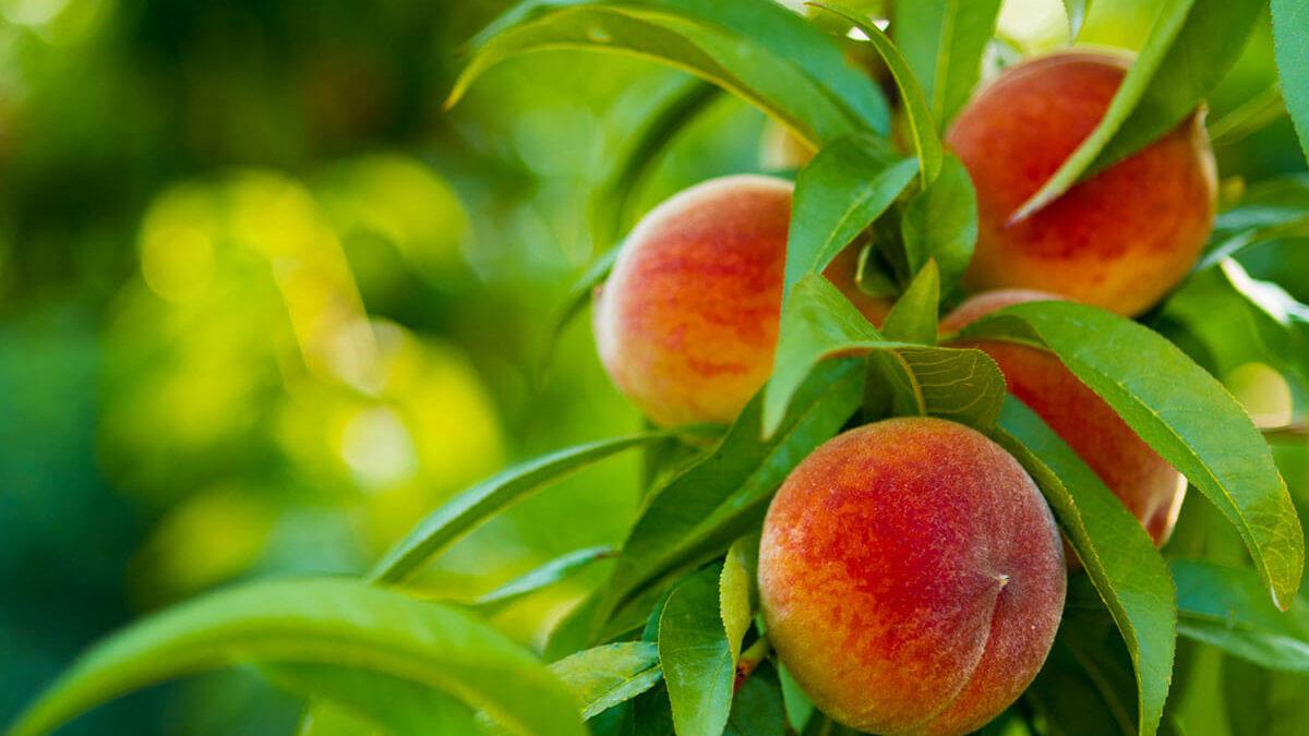 Bringing Forth Fruit