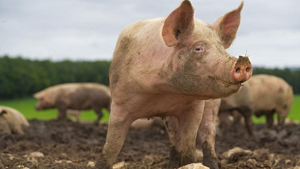 Don't Be a Hog Slopper