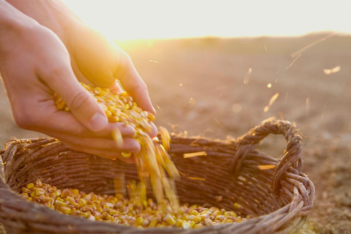 Don't Eat Your Seed Corn