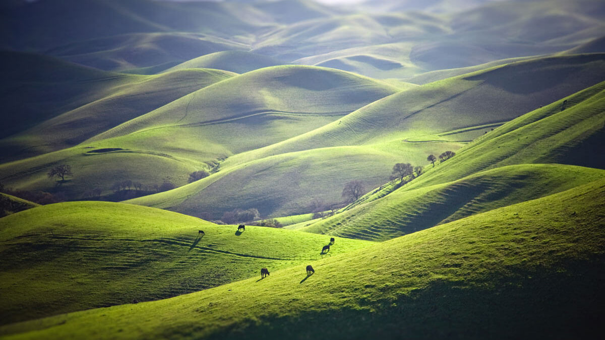 Look to the Hills
